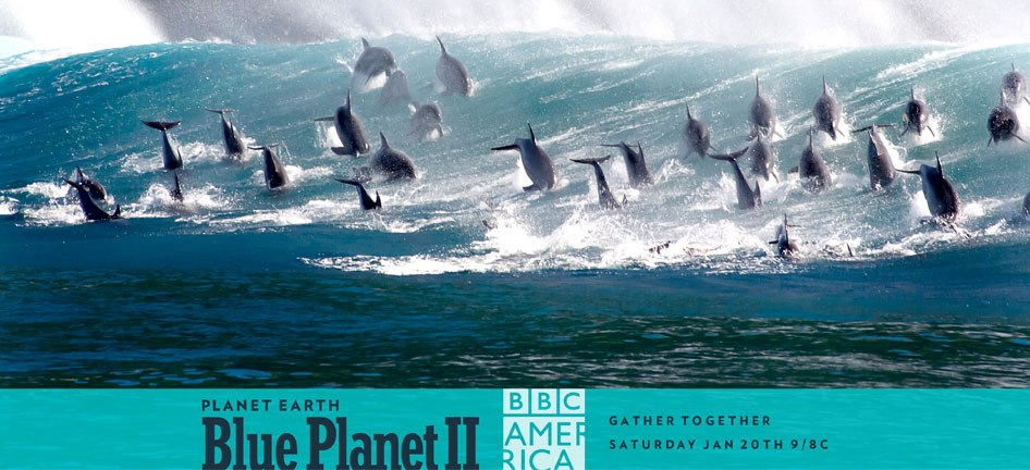 "Have You Ever Been to the Bottom of the Ocean? DIRECTV and BBC America Bring ""Planet Earth: Blue Planet II"" to Life in 4K UHD"